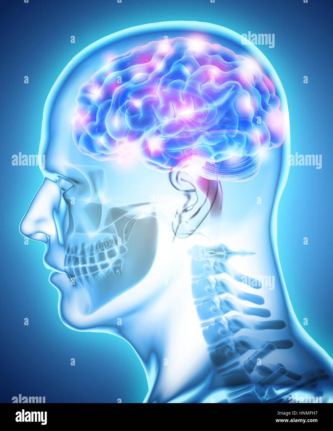 Human Internal Organic - Human Brain, 3D illustration medical concept. - Stock Image