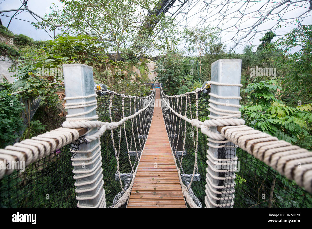 The new Rope Bridge inside the Rainforest Biome, Eden Project. Stock Photo