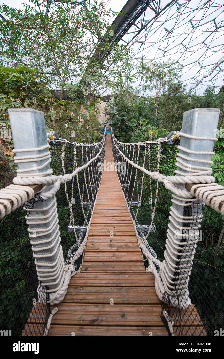 The new Rope Bridge inside the Rainforest Biome, Eden Project. - Stock Image