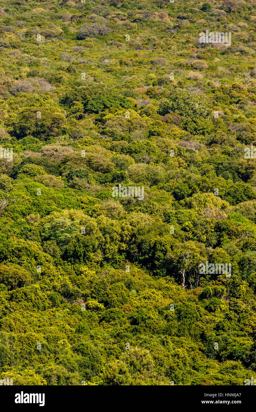 An Aerial View Of The Nechisar National Park, Arba Minch, Ethiopia Stock Photo