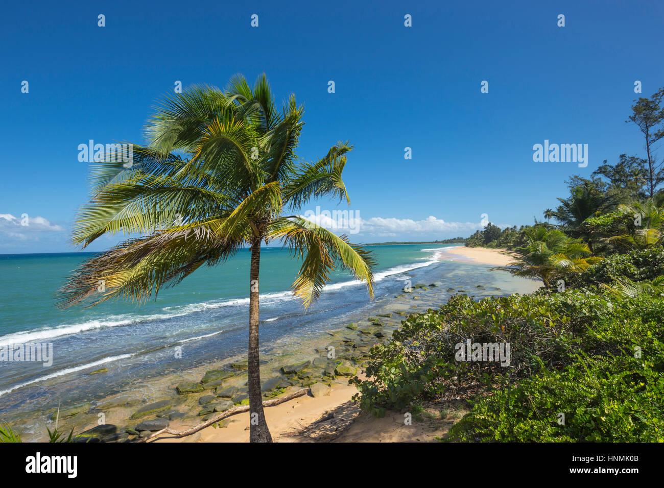 PALM TREE PLAYA PINONES BEACH LOIZA PUERTO RICO - Stock Image