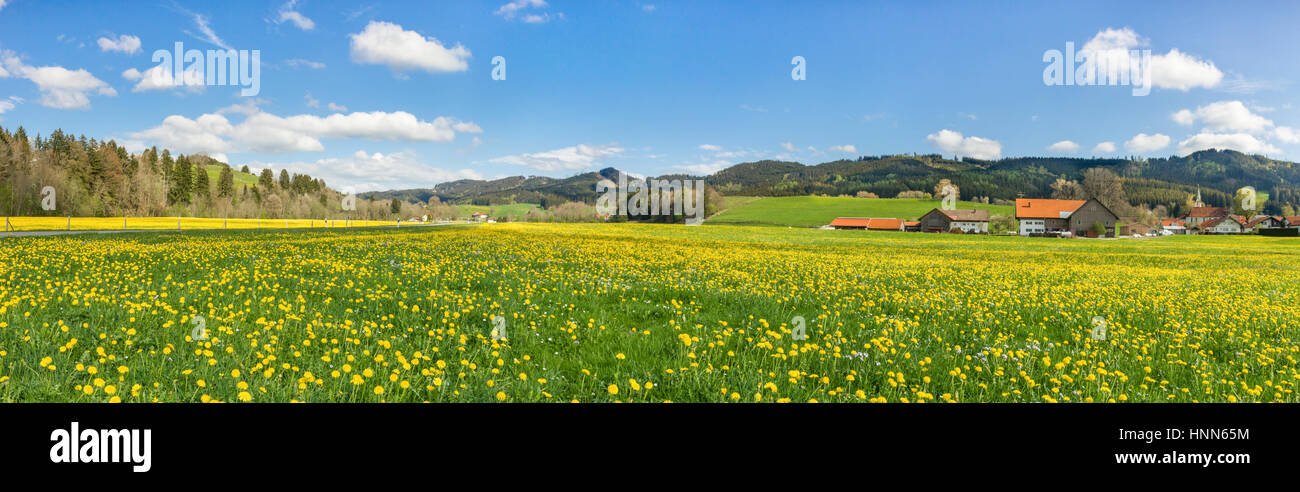 Beautiful yellow flower meadow with some village houses and barns. - Stock Image