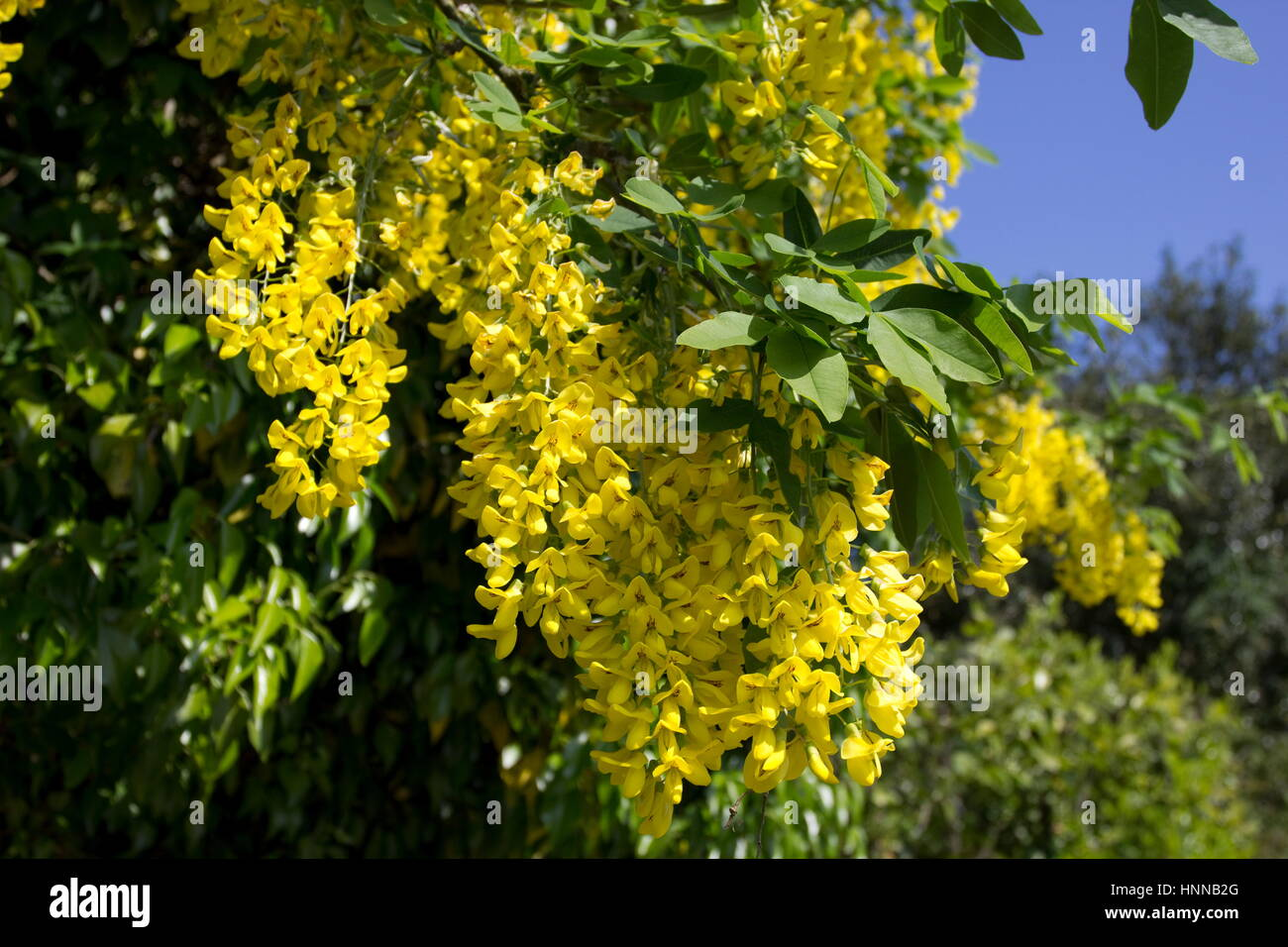 Names Of Trees With Pictures Stock Photos Names Of Trees With