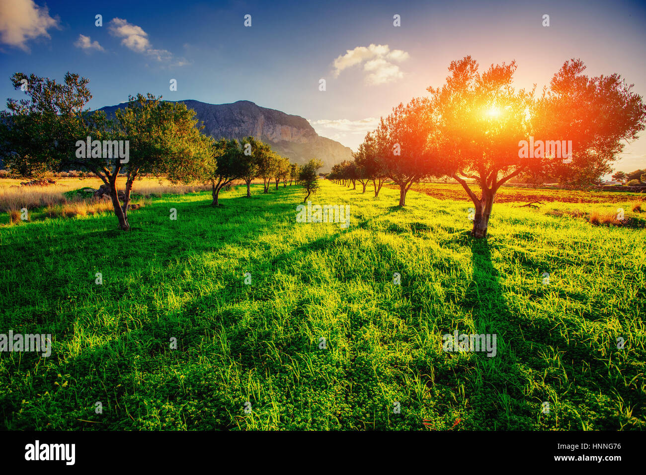 Tree shadow with sunset. Sicily. Italy. Europe - Stock Image