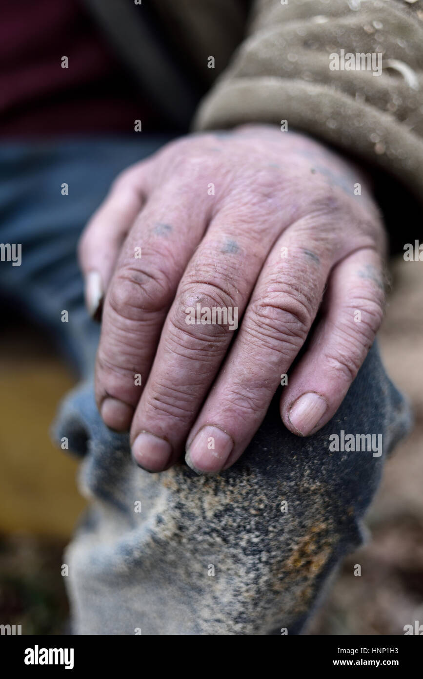 working hands with swallow tattoo stock photo 133864559 alamy