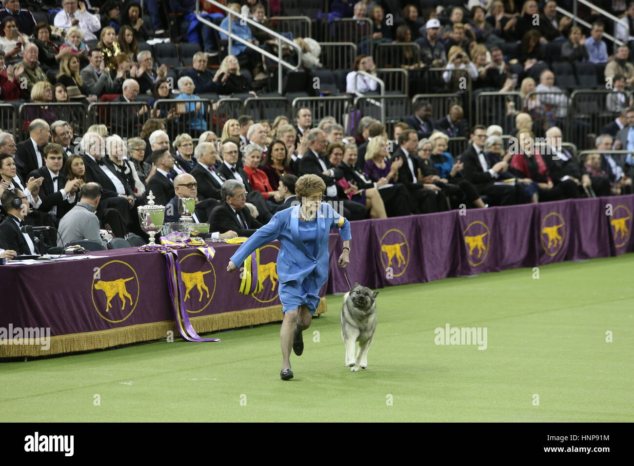 New York City, USA. 15th Feb, 2017. The 141st Westminster Kennel Club's annual Best In Show competition concluded Stock Photo