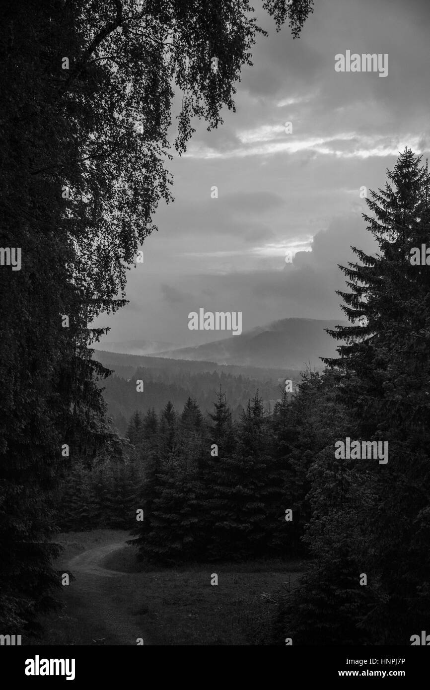 Landscape and nature in the german Harz - Stock Image