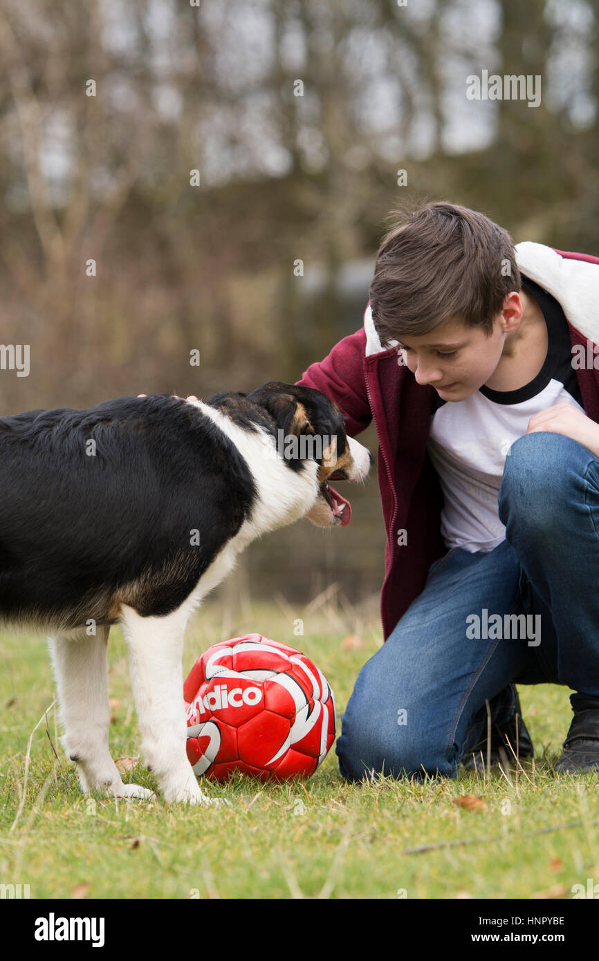 Teenage boy stroking a border collie sheepdog in field. North Yorkshire, UK. - Stock Image