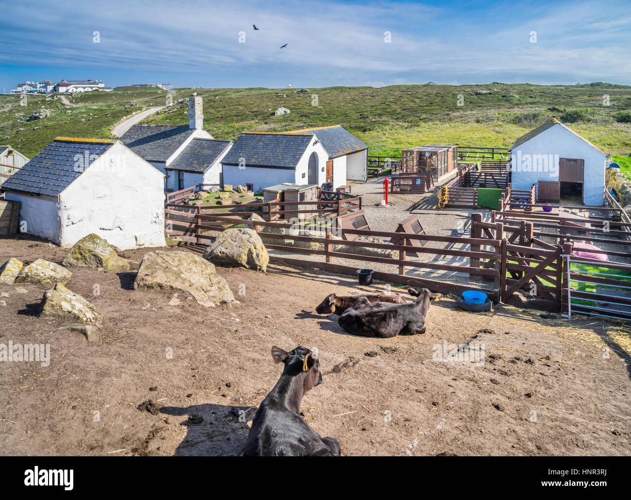 United Kingdom, South West England, Cornwall, Greeb Farm at Land's End - Stock Image
