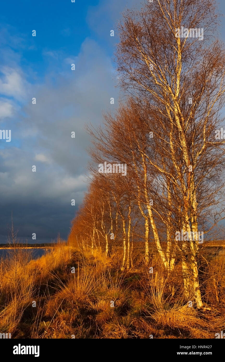landscape in the Goldenstedter Moor, Lower Saxony, Germany Stock Photo