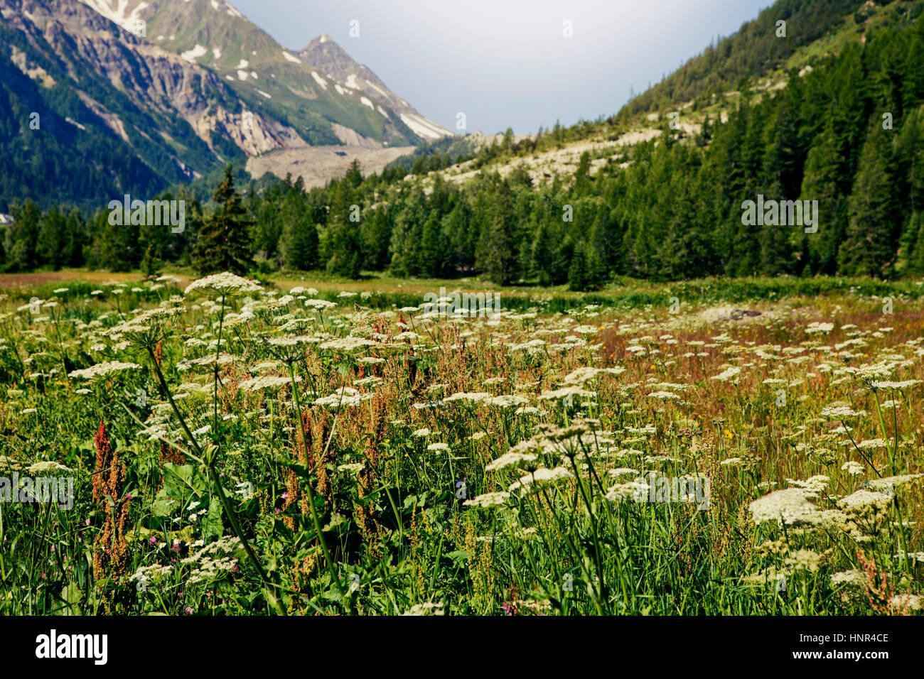 Val Veny, Mont Blanc landscape, Valle d'Aosta, Italy - Stock Image