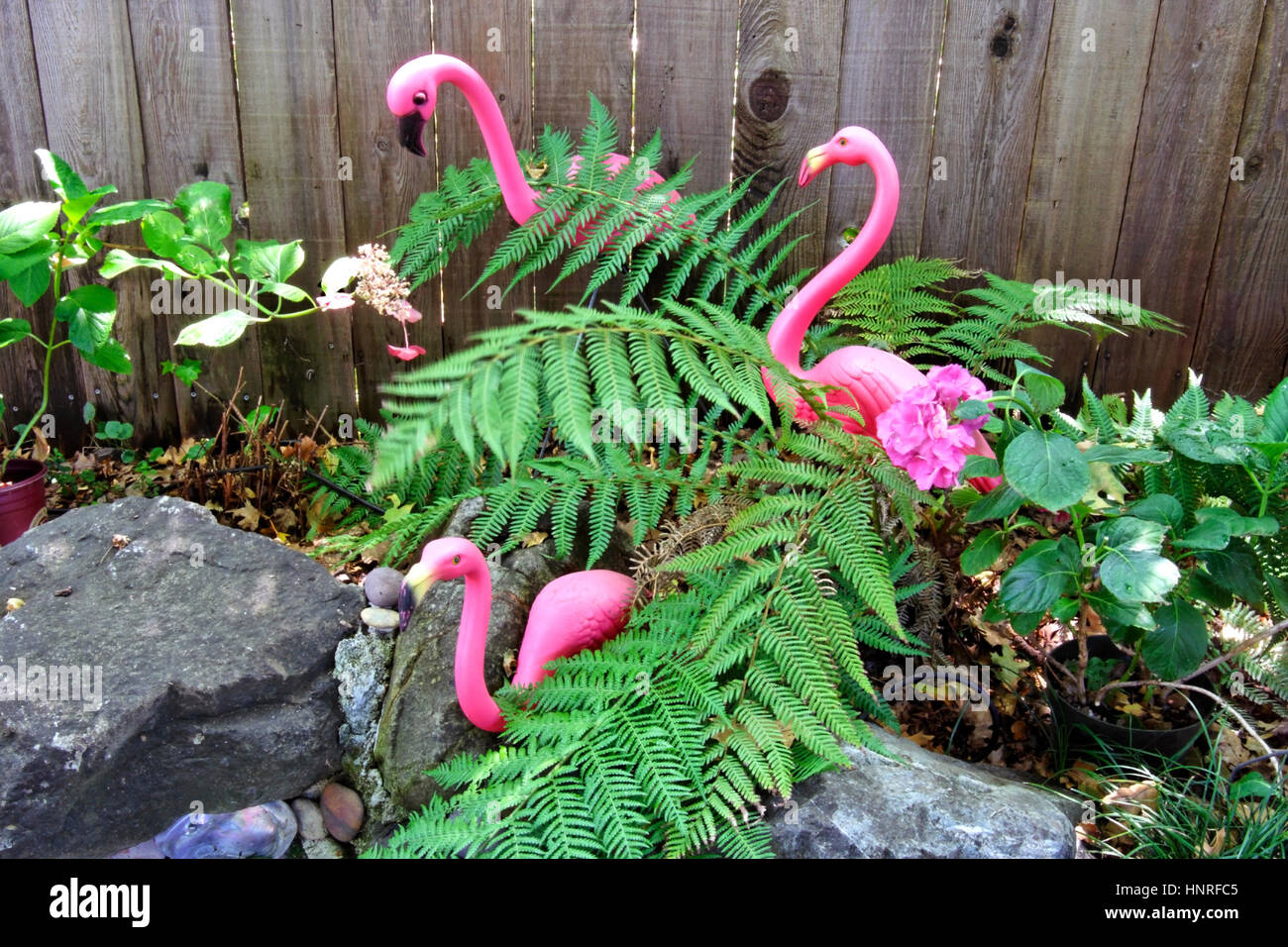 Three kitschy pink flamingos with ferns. - Stock Image