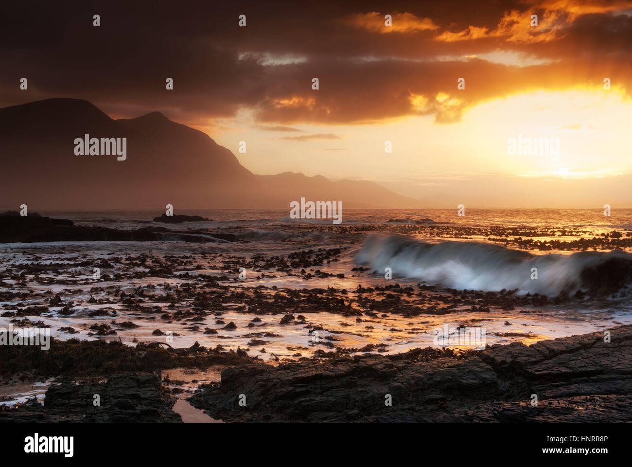 Hermanus, South Africa - Large waves wash kelp ashore at sunset in Western Cape - Stock Image