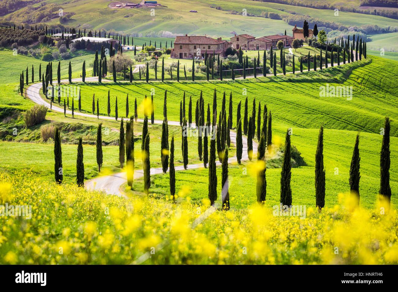 Asciano, cypress trees and rolling hills. Crete Senesi, Tuscany, Italy Stock Photo
