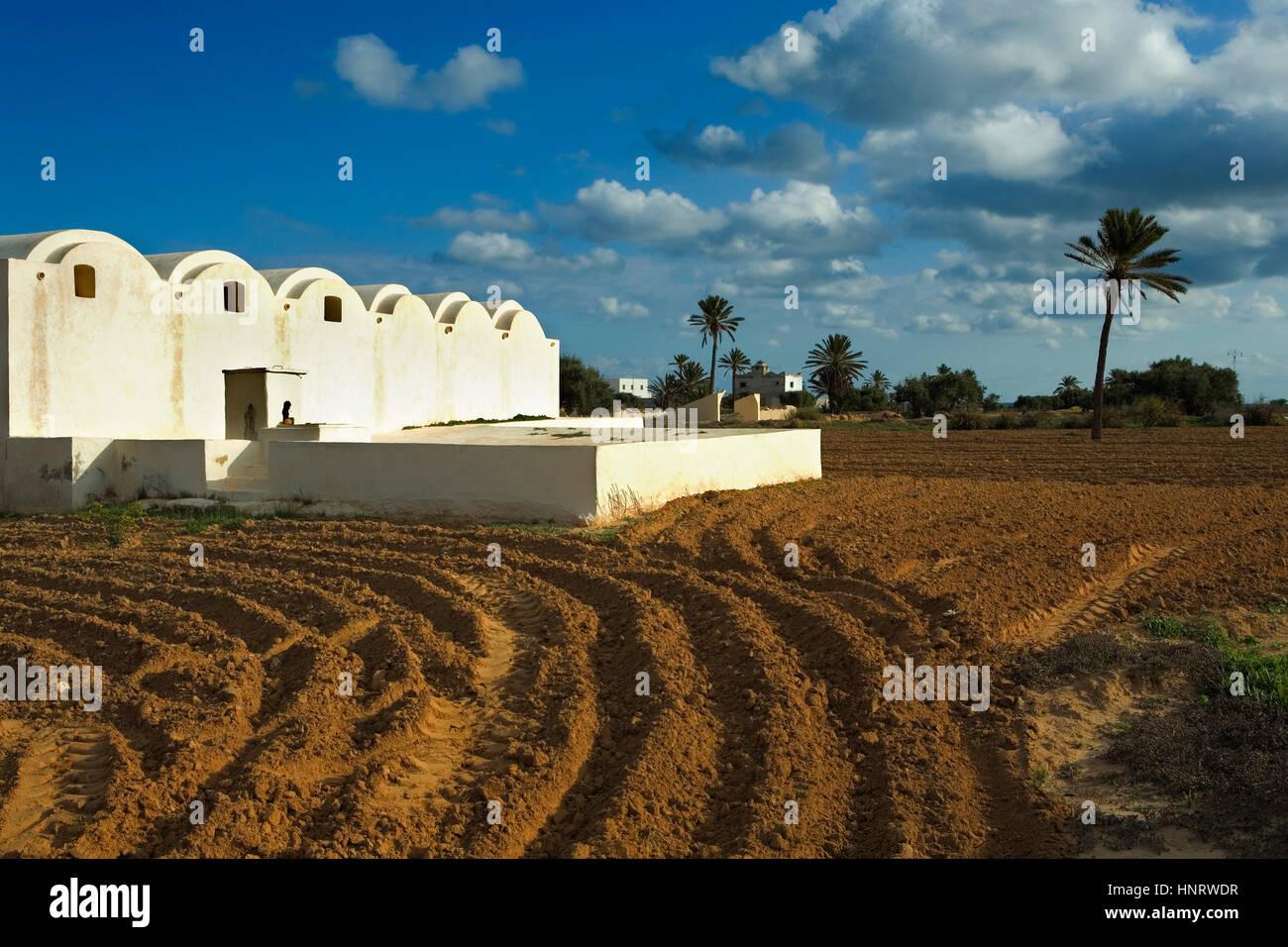 Tunisia.Djerba. traditional architecture. Menzel.Near Sedouikech - Stock Image