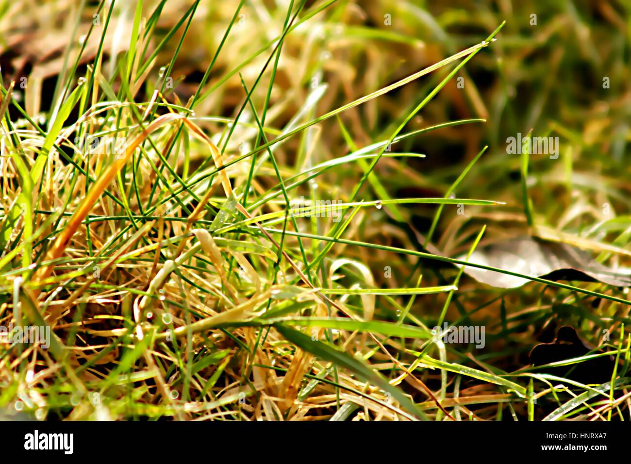 Close up of green grass in rainy weather - Stock Image