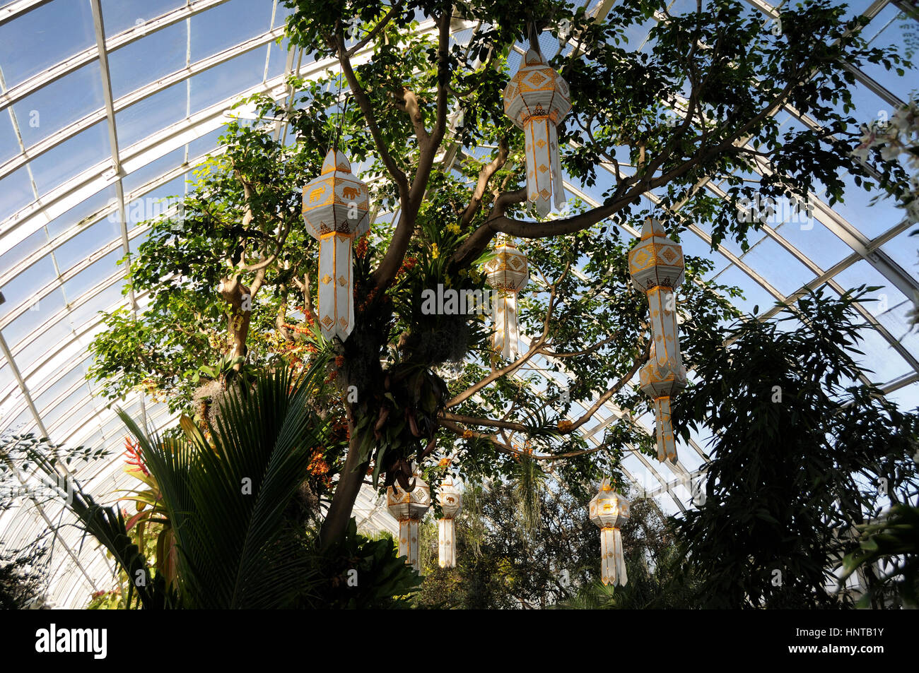 New York Botanical Garden, New York, USA, 16th February 2017. Lanterns hung in a tree to evoke the floating lanterns - Stock Image