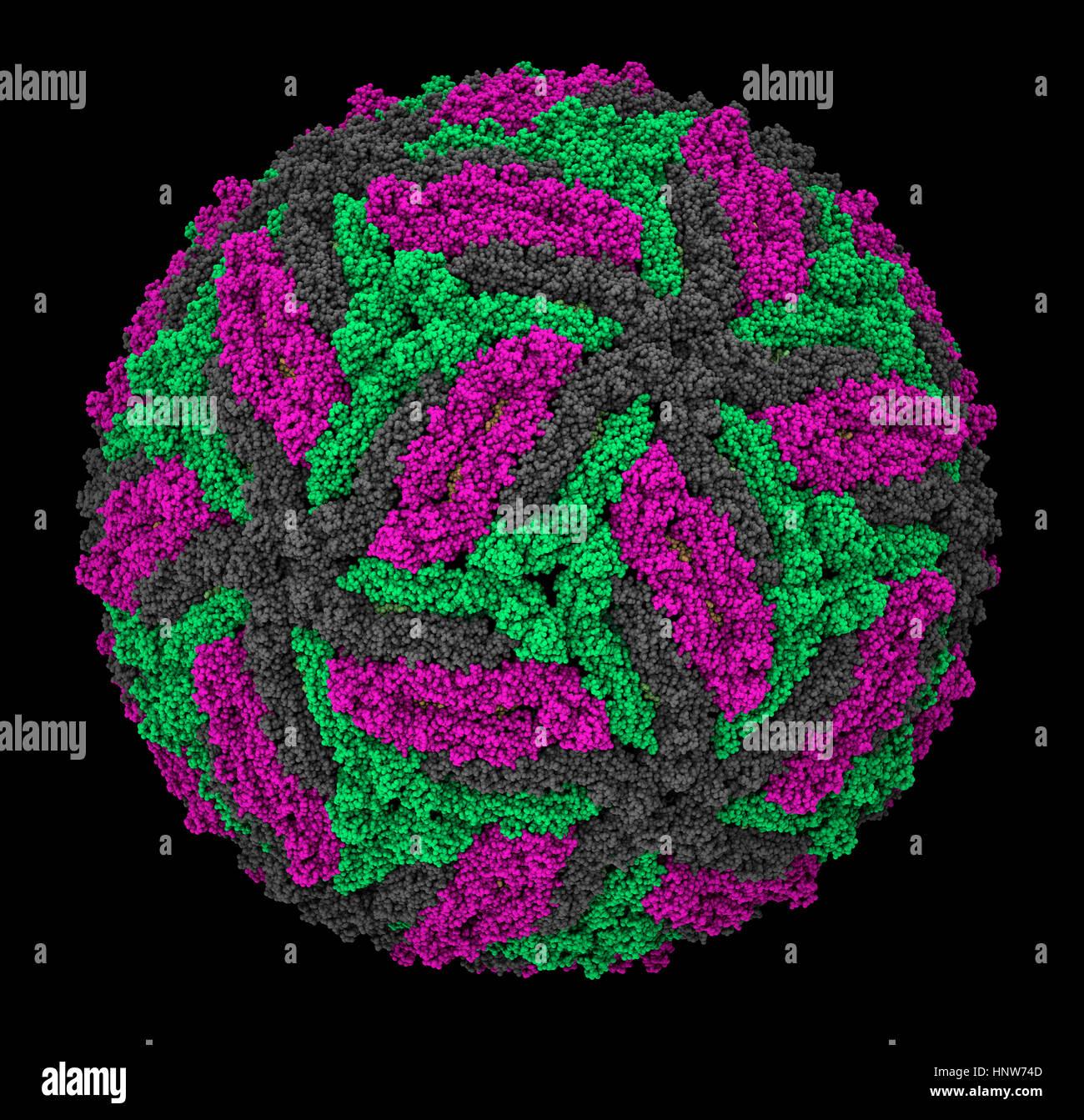 Zika virus virion capsid molecular model - Stock Image