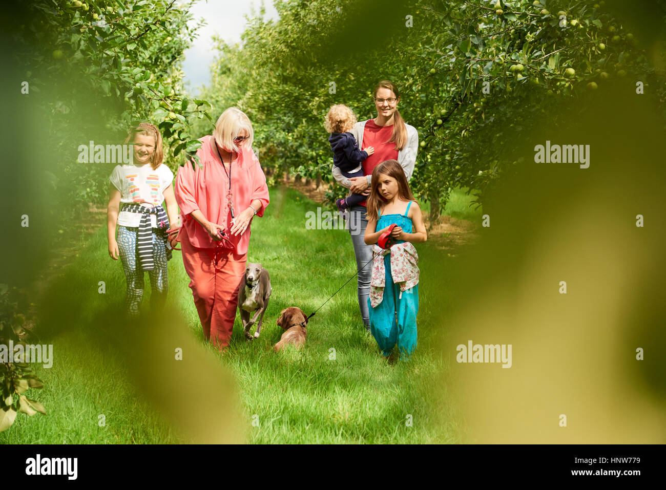 Family walking dog in apple orchard - Stock Image