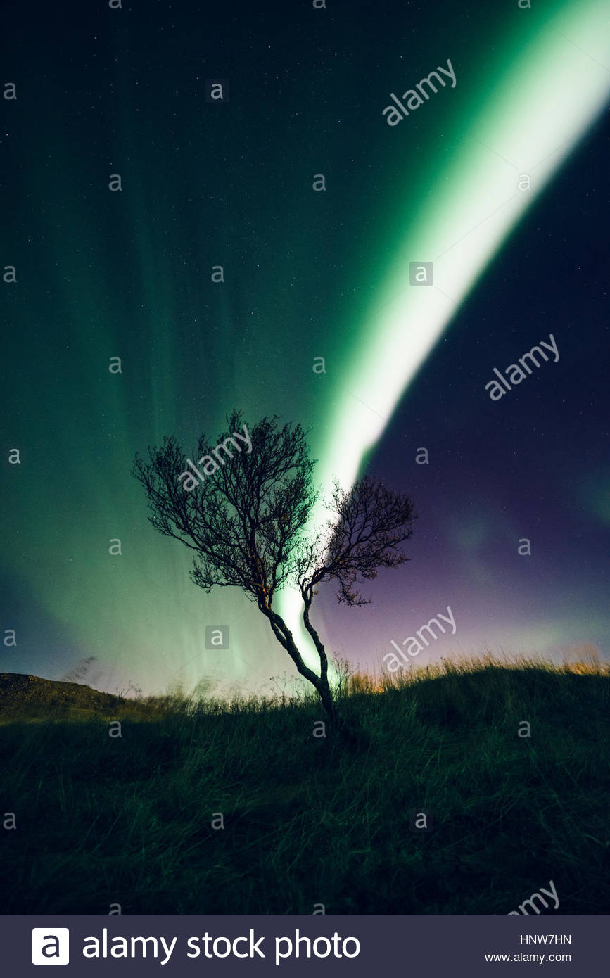 Aurora over tree top, Reykjavik, Iceland - Stock Image