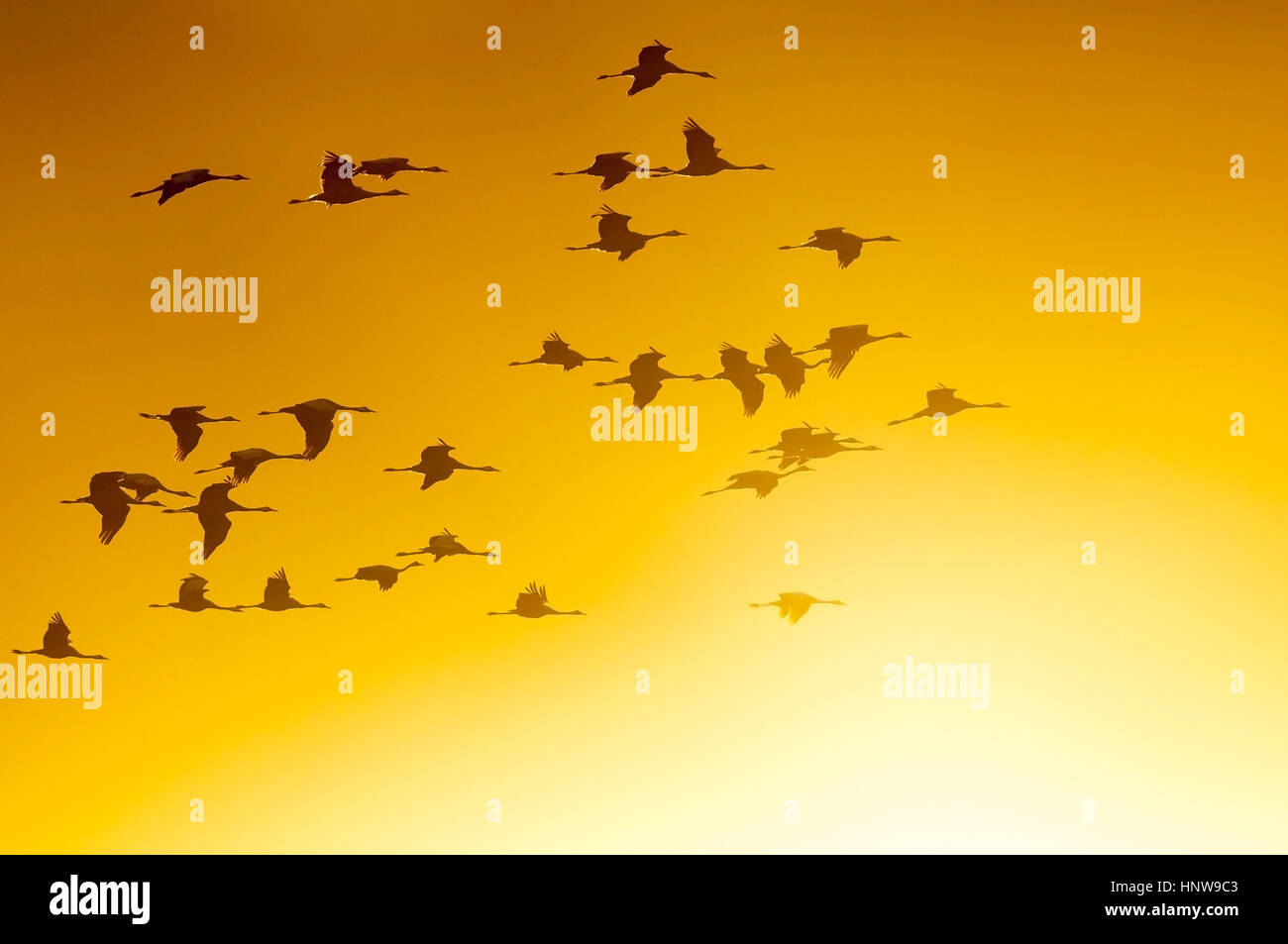 Crane, bird of the luck, Kranich, Vogel des Gluecks Stock Photo