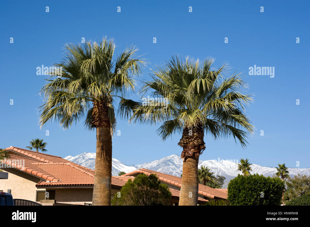 Rooftops of homes with palm trees and snow on mountains in Palm Desert - Stock Image