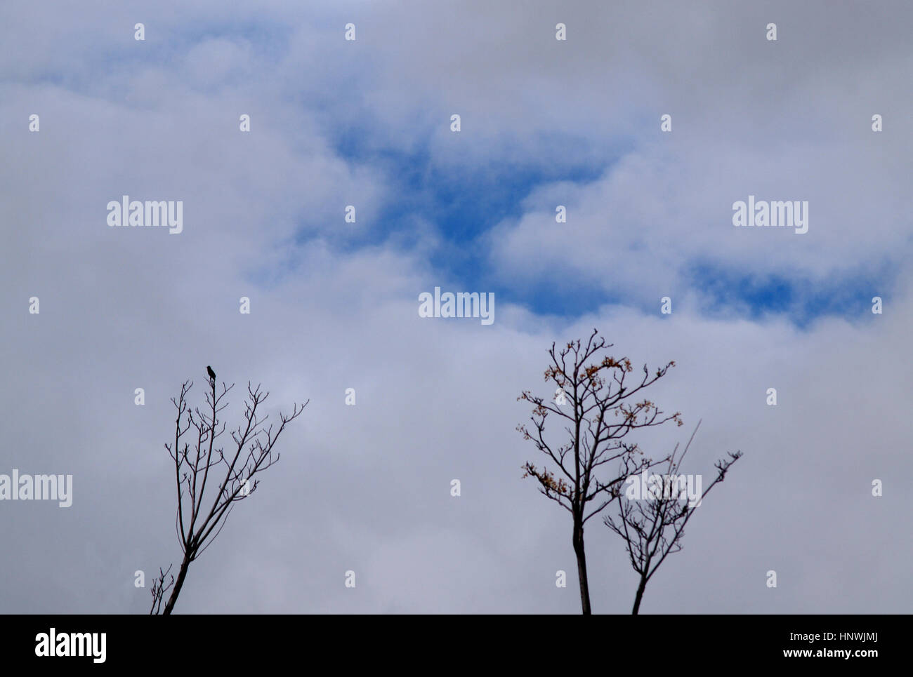 clouds, trees, bird and blue sky - Stock Image