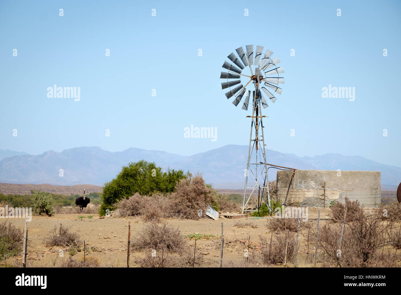 Wind Pump in the Little Karoo near Prince Albert, South Africa with ostrich - Stock Image