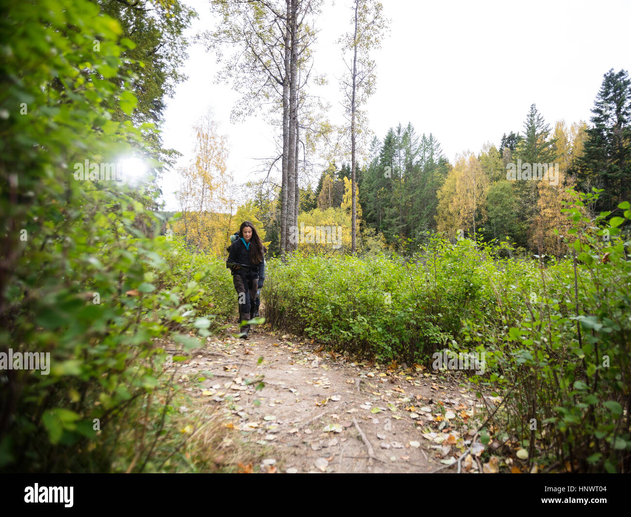 Young Female Hiker Walking On Forest Trail - Stock Image
