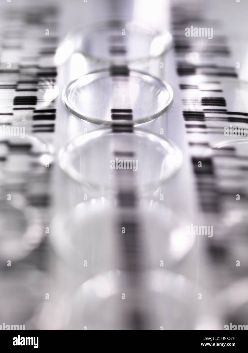 DNA autoradiogram gel illustrating genetic results laying on a row of test tubes in the laboratory - Stock Image