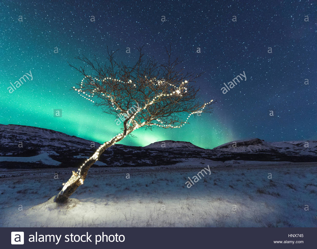 Tree with lights, Aurora Borealis in background, Hvalfjordur, Iceland - Stock Image