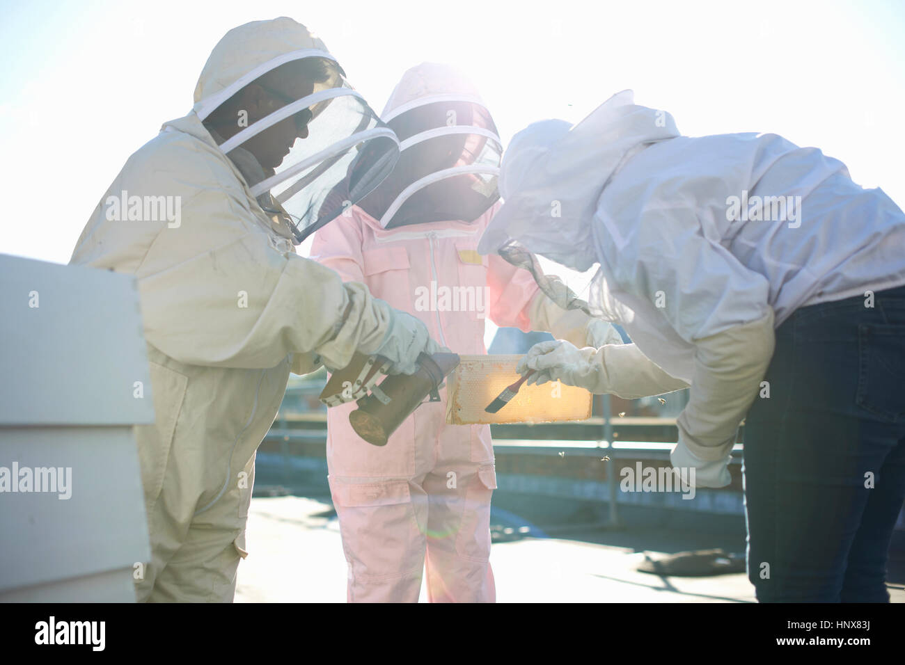 Beekeepers discussing honeycomb on city rooftop - Stock Image