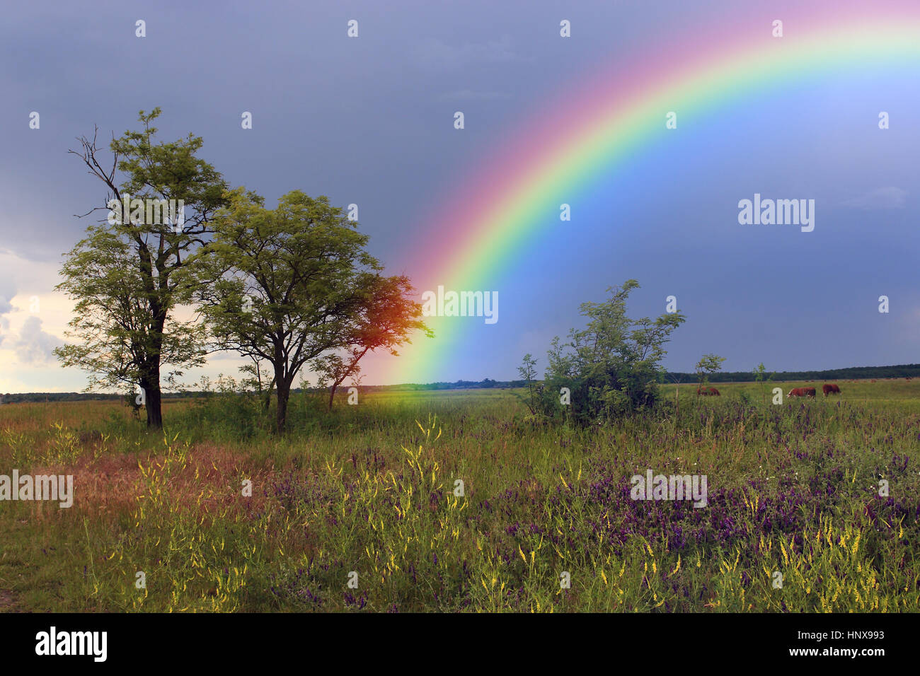 Rainbow over farmland - Stock Image