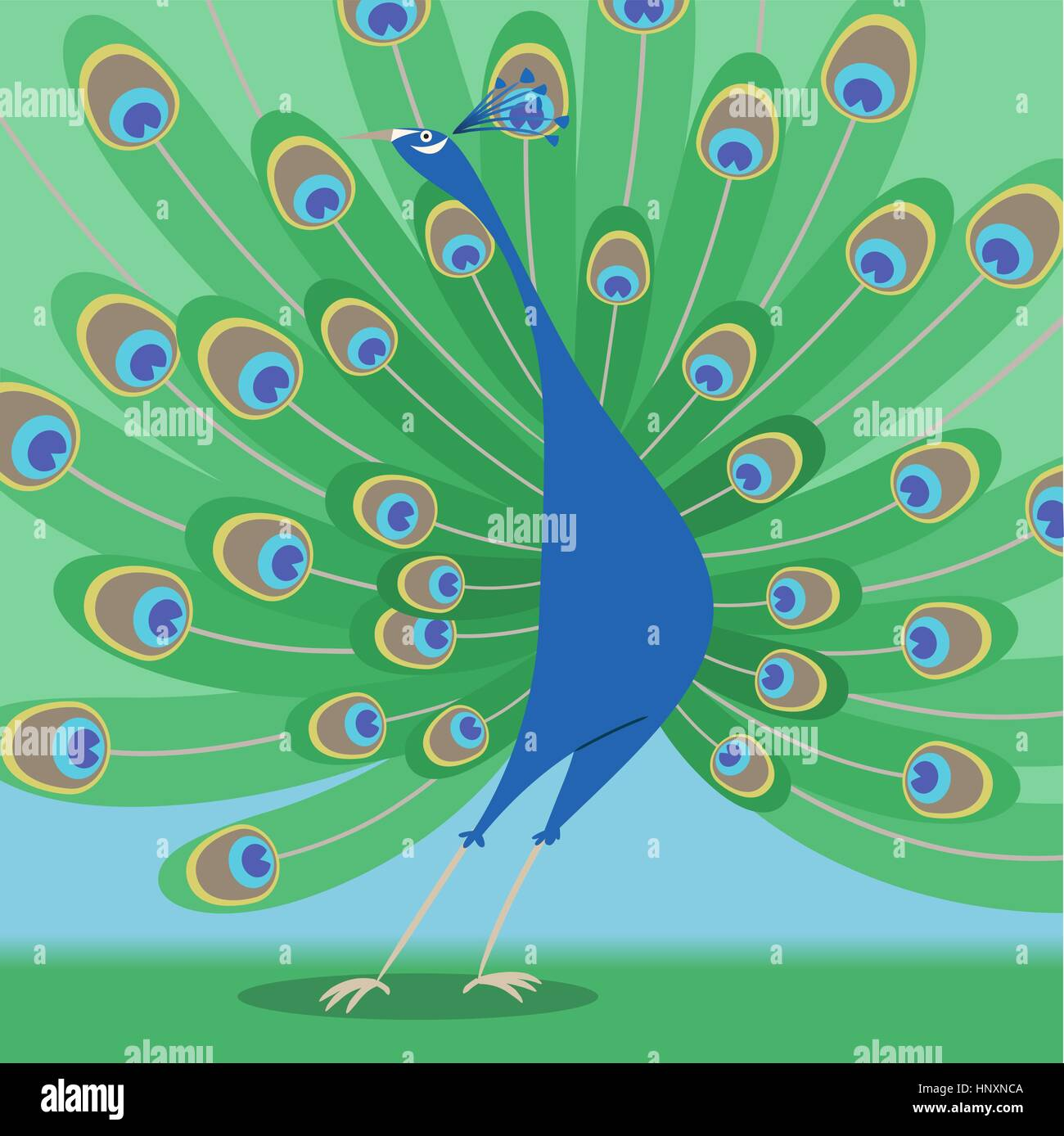 Multicolour standing peacock with beautiful feathers vector illustration. - Stock Vector