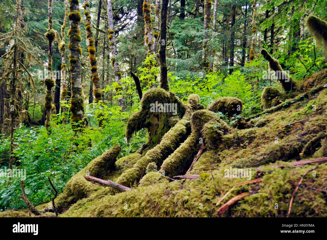 view a landscape of sotheast alaska, tongass national forest - Stock Image