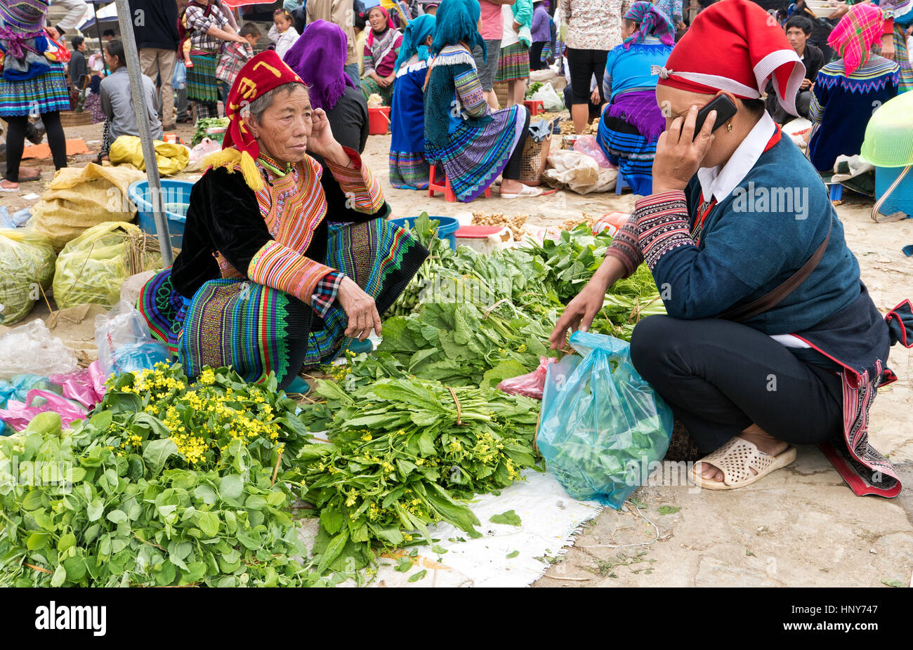 Hmong woman selling her home grown green leafy vegetables,  farmers market, customer using her cell phone,  native - Stock Image