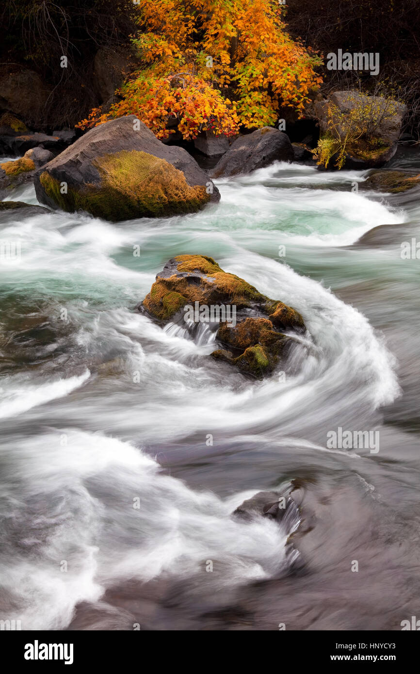 Fall Color and Rapids on the Deschutes River Outside Bend Oregon - Stock Image
