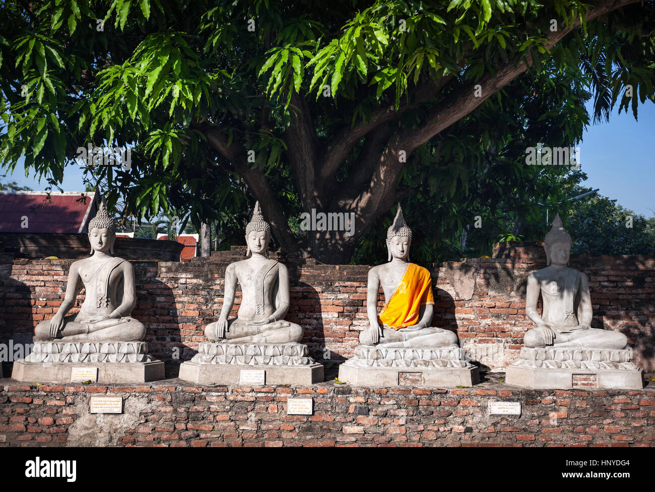 Buddha statues under the tree, one with yellow stripe in Wat Yai Chai Mongkol monastery in Ayuttaya, Thailand - Stock Image