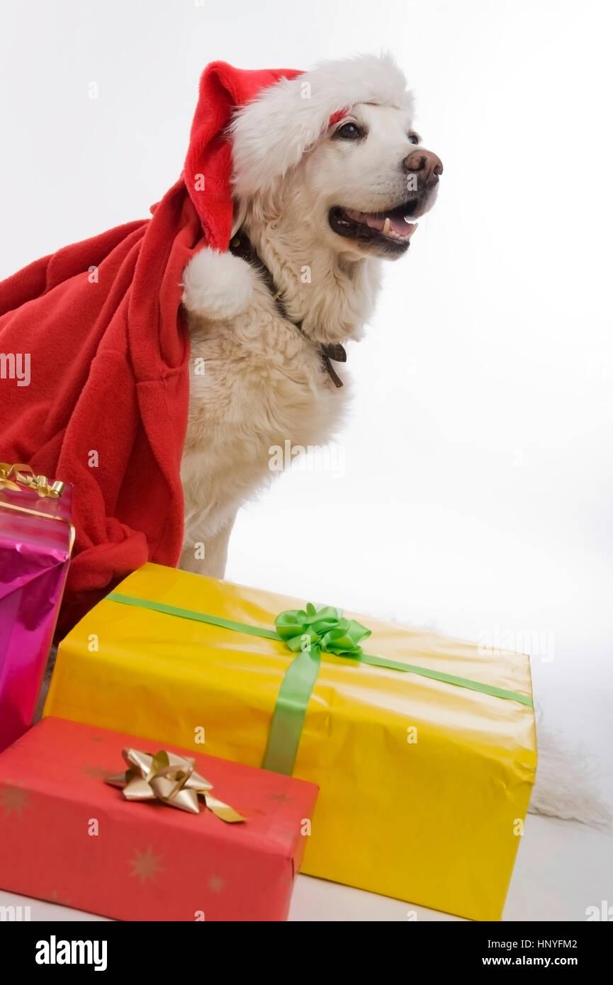 Dog Motive Stock Photos & Dog Motive Stock Images - Alamy