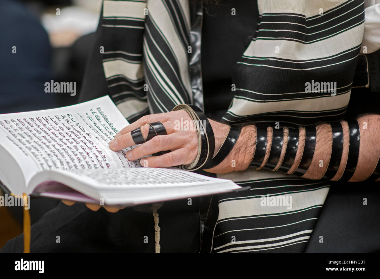 An othodox Jewish man wearing phylacteries at a weekday morning service in a synagogue in Crown Heights, Brooklyn, - Stock Image