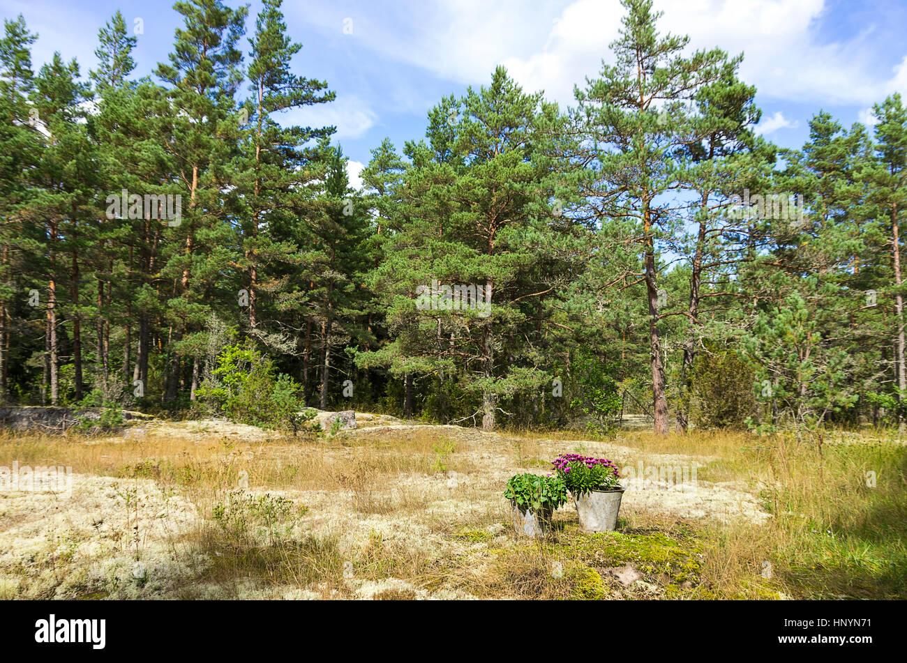 Minimalist landscaping in the countryside near Oskarshamn, Kalmar County, Sweden. - Stock Image