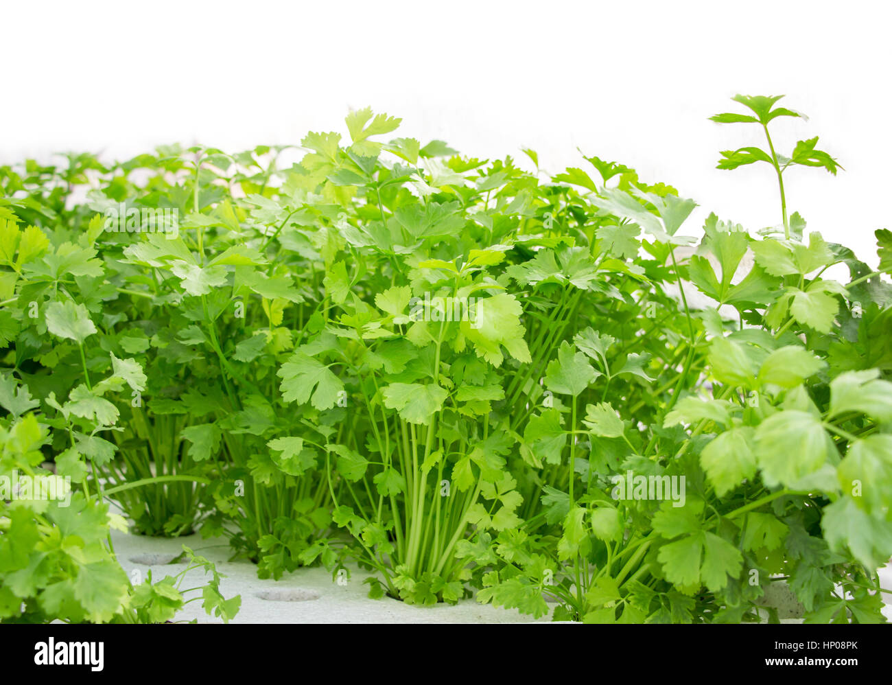 Hydroponic Commercial Farm High Resolution Stock Photography And Images Alamy