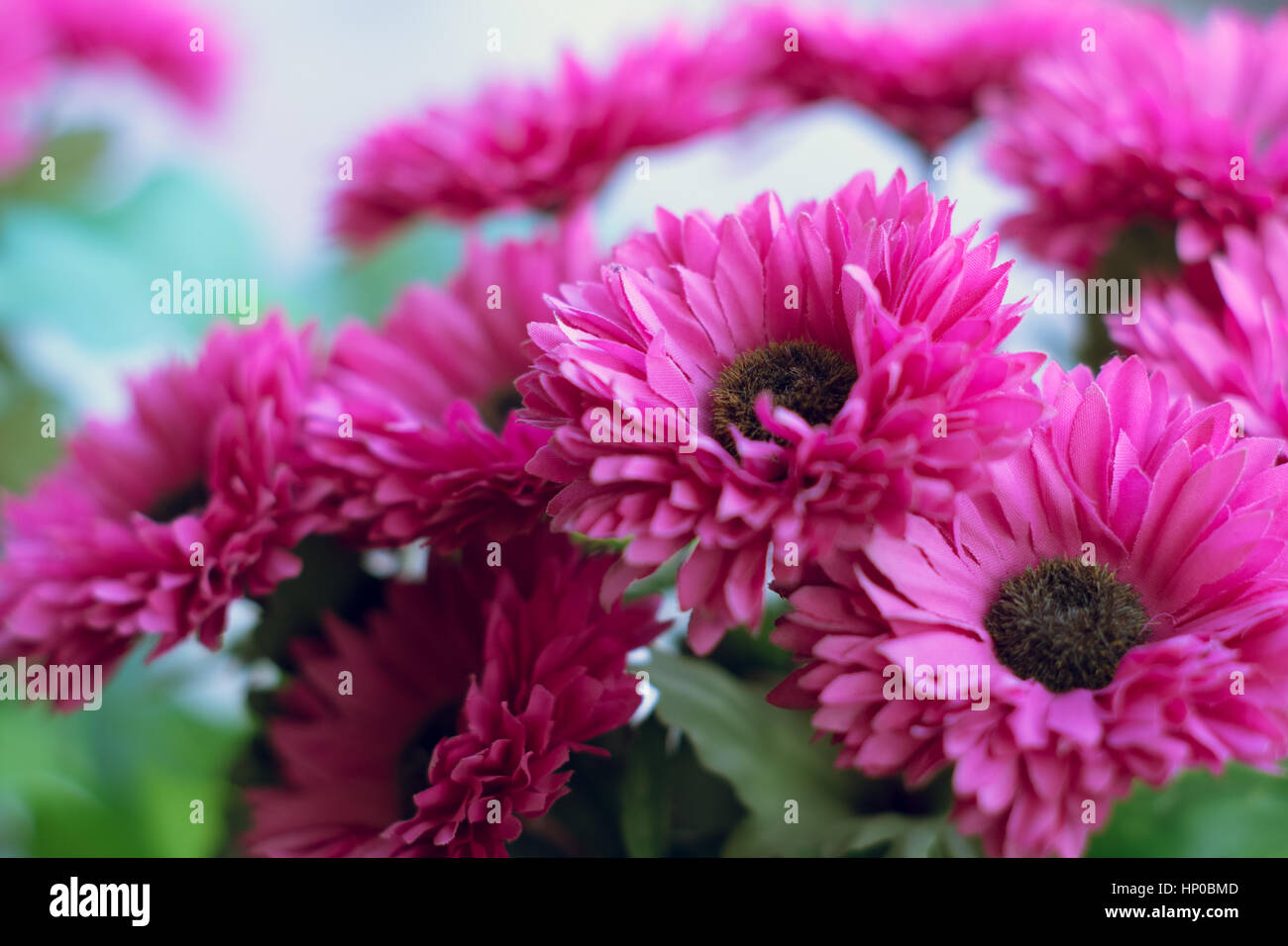 Background Of Pink Artificial Daisy Flowers Stock Photo 134004205