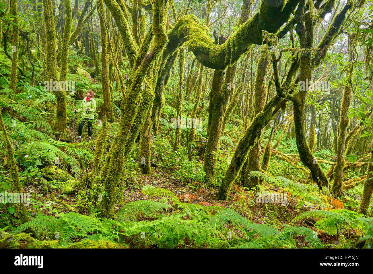 Tourist in the laurel forest, Garajonay National Park, La Gomera, Canary Islands, Spain - Stock Image