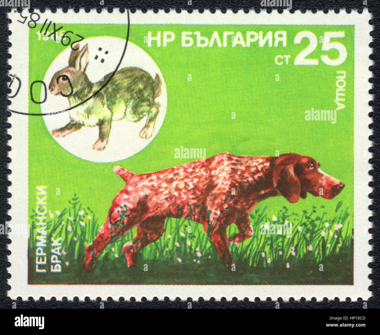 A postage stamp printed in Bulgaria  shows  a German Shorthaired Pointer and  hare,  from series Breeds of hunting Stock Photo