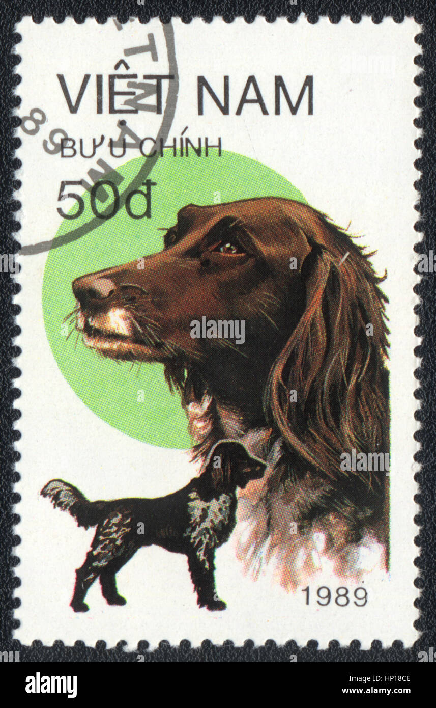 A postage stamp printed in Vietnam shows  a German Shorthaired Pointer,  from series Breeds of hunting dogs,  1989 Stock Photo