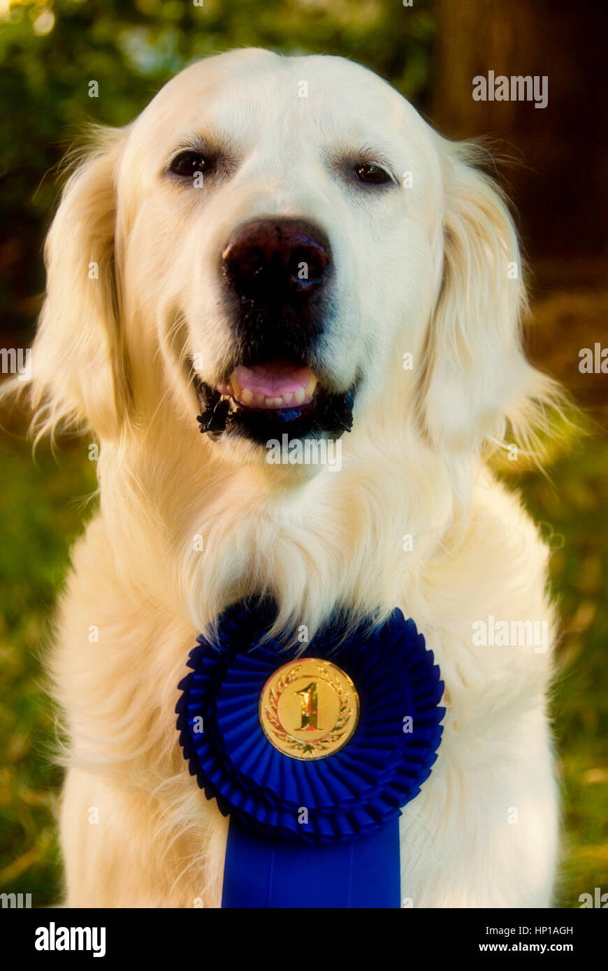 Best rescue rosette  gold centre gold ribbon dog show