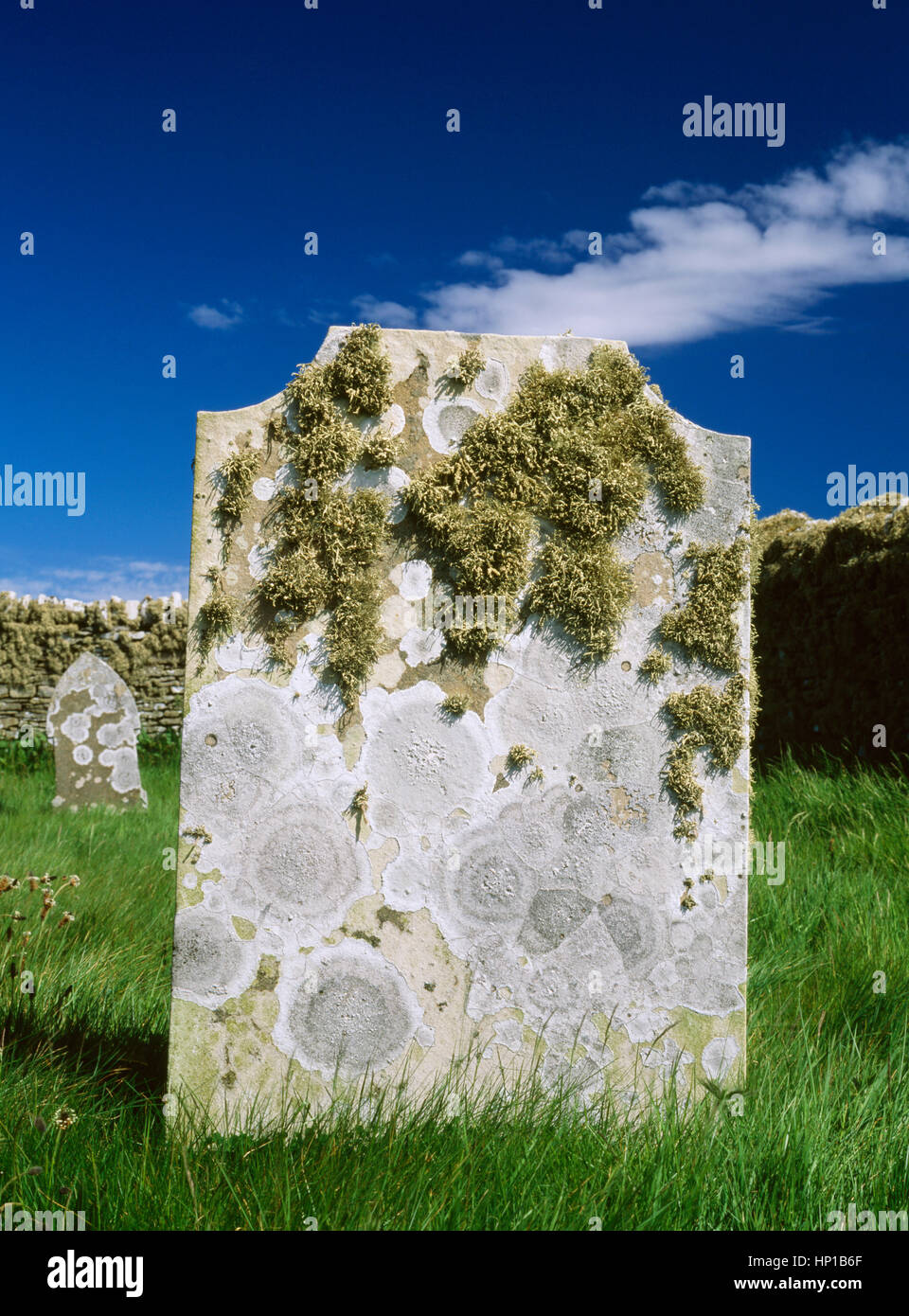 St Mary's Chapel; Wyre; Orkney, Scotland, UK: lichen growing on headstone close to the sea - Stock Image