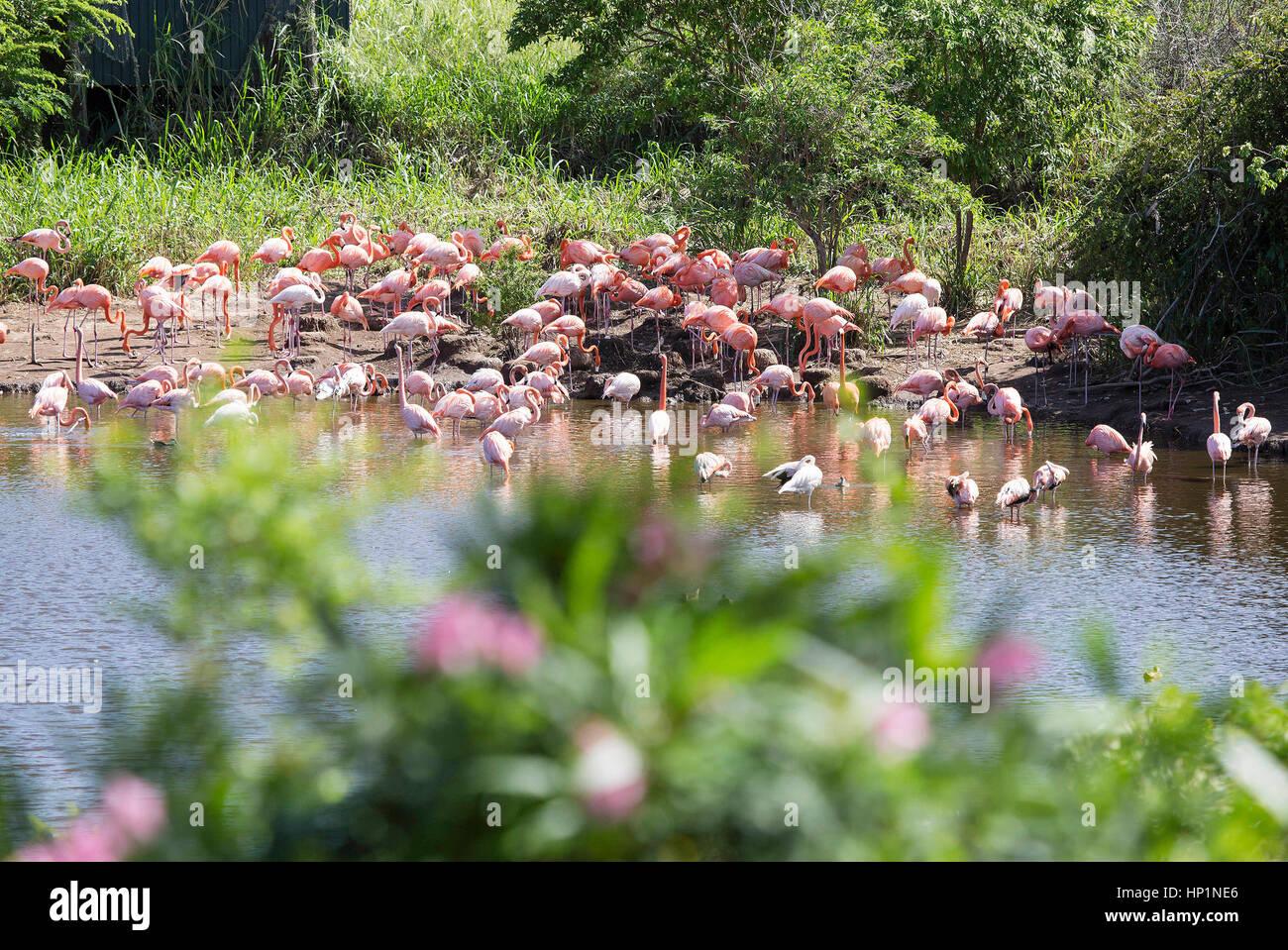 Flamingos British Virgin Islands Where
