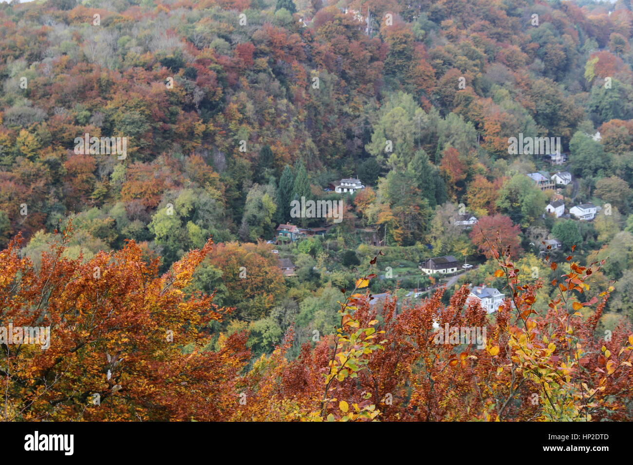 Autumn in Symonds Yat (West), Herefordshire, England. Taken from Symonds Yat Rock. - Stock Image